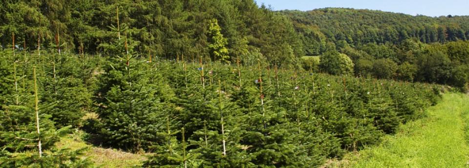Weihnachtsbaum Selber Schlagen Sauerland.Tannenhof Teipel Ein Familienbetrieb Aus Dem Sauerland